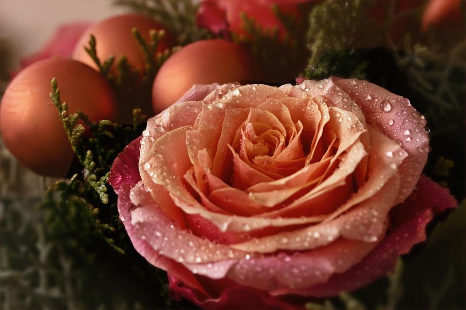 flower-2886353_960_720