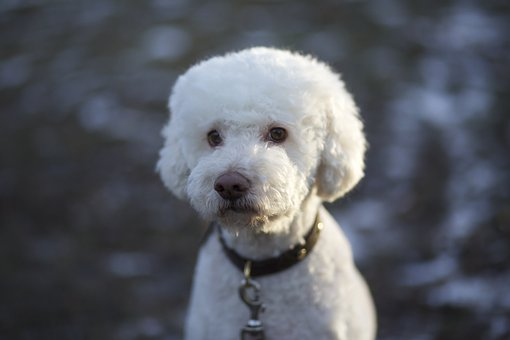 куче трюфелотърсач