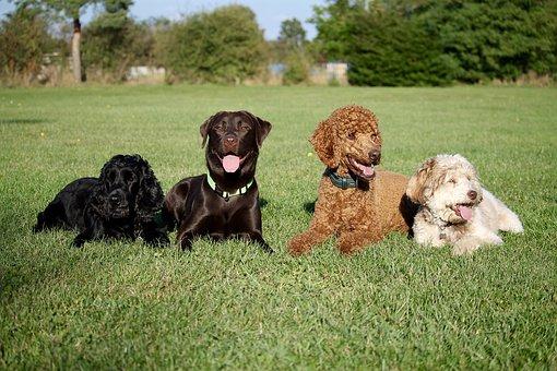 обучение за кучета